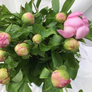 Boeket Pioenen Rosé €20 Scheerhoorn Bloemen Leek