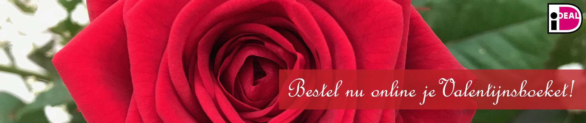 Valentijn hero Scheerhoorn Bloemen Leek